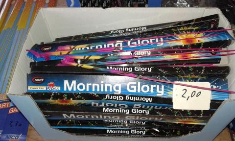 Morning Glory Bengal Lichtspaß Jugendfrei