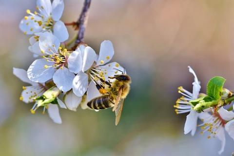 Bienen-Leasing